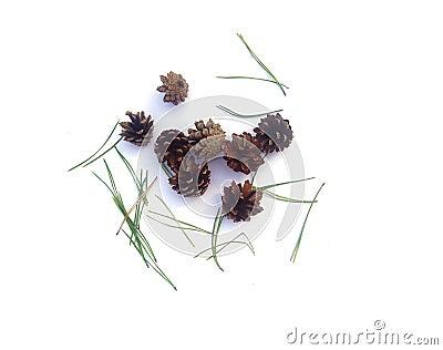 Conos de abeto
