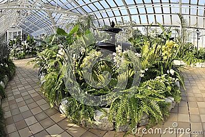 Conservatory Foliage