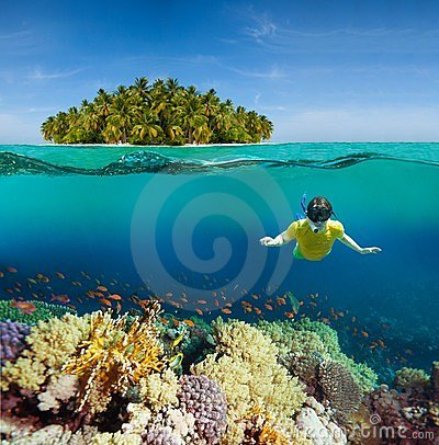 Console dos corais, do mergulhador e da palma