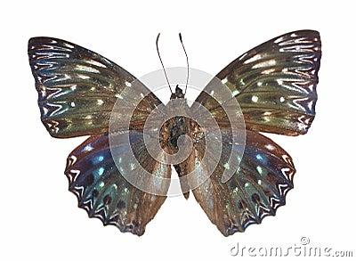 Constable van de vlinder
