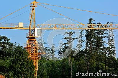 Construction dans la forêt