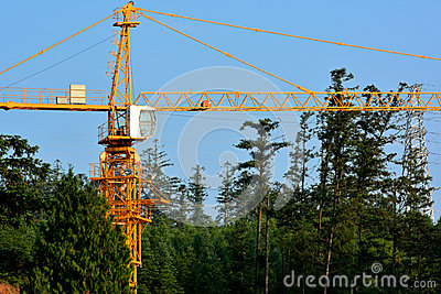 Construction in forest