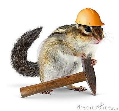Constructor de la ardilla listada, concepto de la reconstrucción
