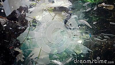 Contaminación plástica del océano, bolsas plásticas, botellas, bolsas flotan en el agua con medusas Bulgaria, Mar Negro almacen de metraje de vídeo