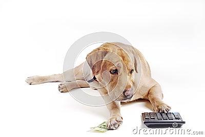 Conteggio del cane sul calcolatore