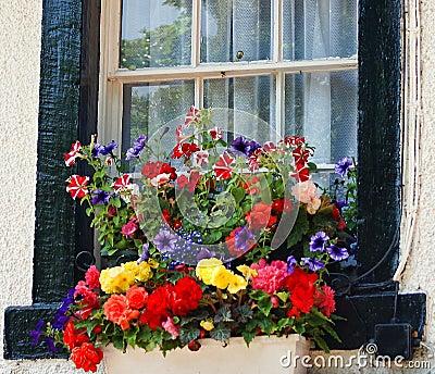 contenitore inglese di fiore della finestra fotografia On davanzale in inglese