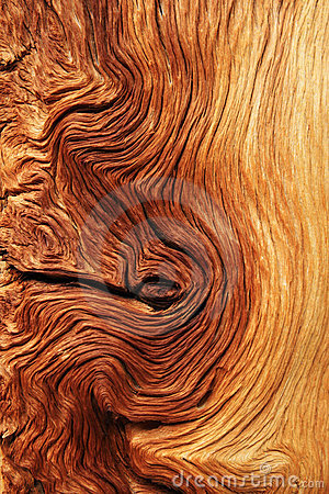 Free Contorted Wood Grain Royalty Free Stock Images - 20942239