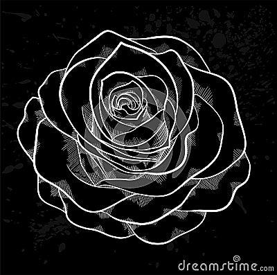 contour de rose de blanc avec les taches grises sur un fond noir illustration stock image. Black Bedroom Furniture Sets. Home Design Ideas