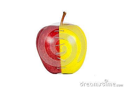 Contrast apple halves