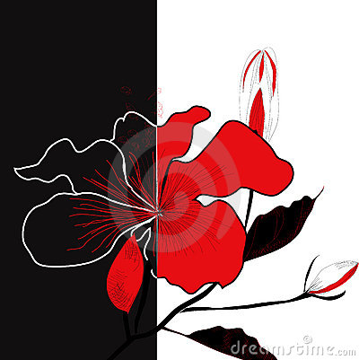 Contrast illustration with flower