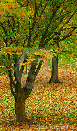 Contrasts of Autumn