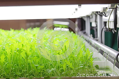 Controlled Environment Hydroponic