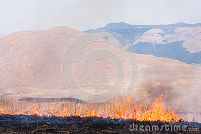 Controlled grass burning near Mount
