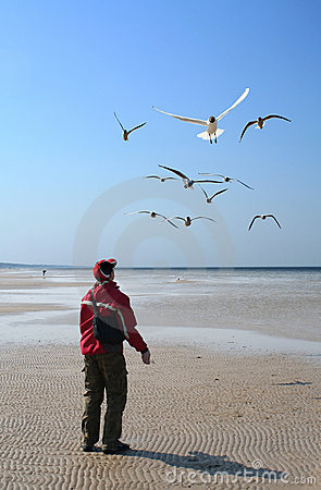 Free Conversation With Gulls Stock Photography - 2097662