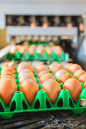 Free Conveyor Belt Transporting Crates With Fresh Eggs Royalty Free Stock Image - 34280926