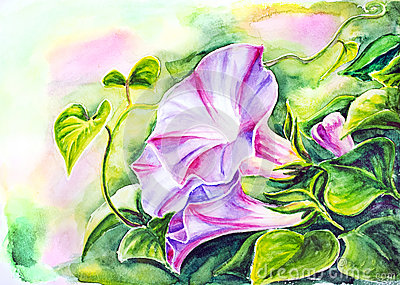 Convolvulus. Watercolor painting.