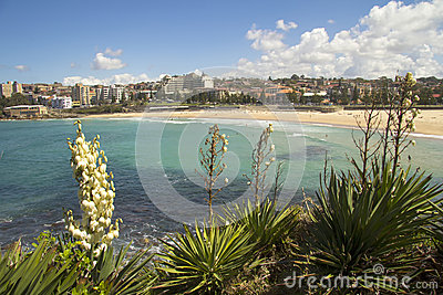 Coogee Beach with Yucca FLowers