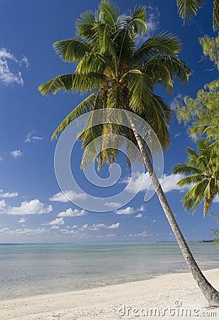 Cook Islands - Tropical Beach Paradise