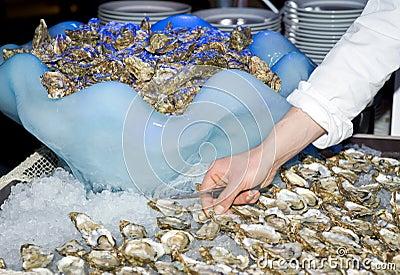 Cook preparing oysters