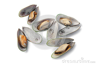 Cooked green lipped mussels