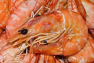 Cooked shrimp, prawns close up