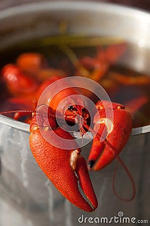 Cooking crayfish