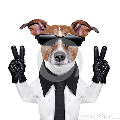 Free Cool Dog Stock Photos - 30907583