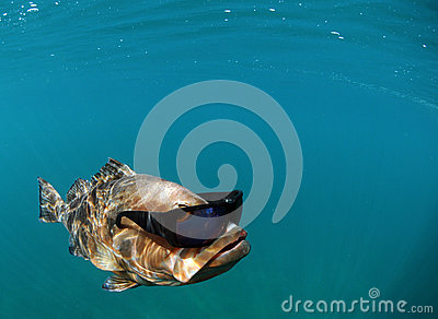 Cool Fish Wearing Sunglasses Stock Photos Image 25314593