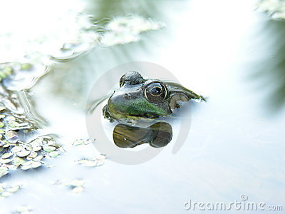 Cool Frog Shot