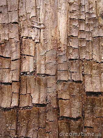 Cool Grunge Wood Bark Texture