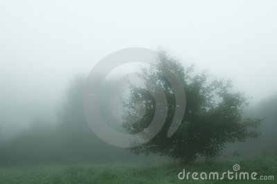 Cool myst tree in the morning english fog