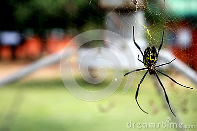 Cool spider