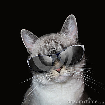 Cool White Cat With Party Sunglasses on Black