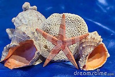 Coquilles de mer