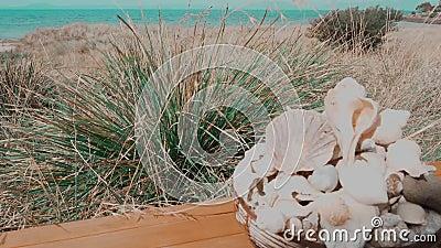 Coquilles de mer d'herbe de scène de plage banque de vidéos