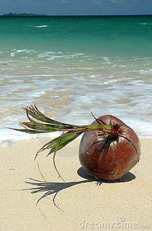 Coral Beached Coconut SE Asia