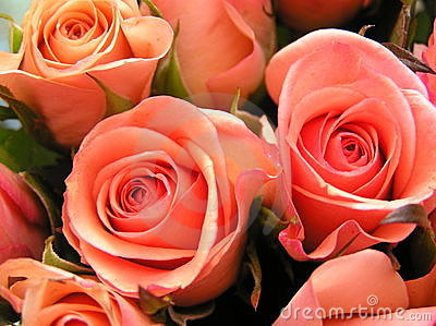 Coral colored roses