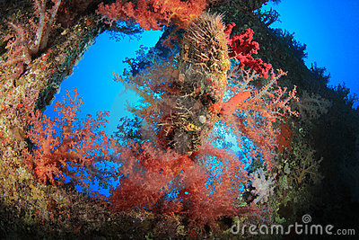 Coral encrusted Shipwreck