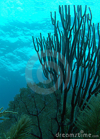 Free Coral Fan Royalty Free Stock Photo - 2288055