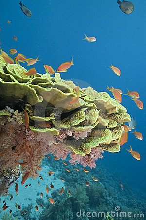 Coral and fish