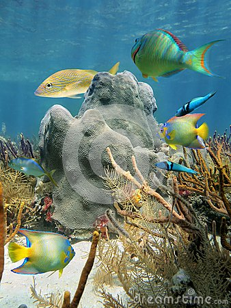 Coral and fish in the Caribbean Sea