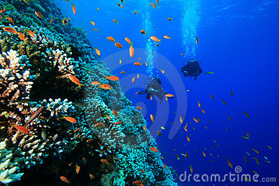 Coral and Fish and Scuba Divers