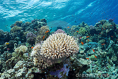 Coral and fishes