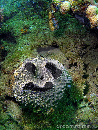 Coral Funny Face
