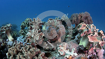 Tropical underwater scene with corals