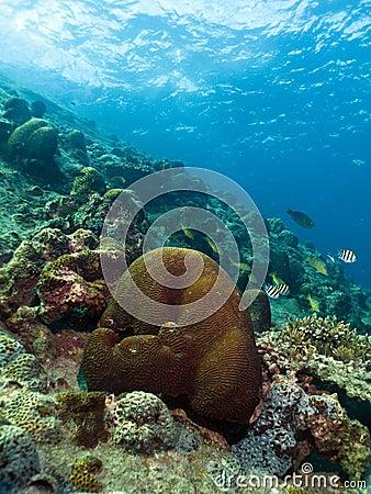 Coral Garden Vista