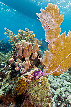Coral Gardens, Honduras