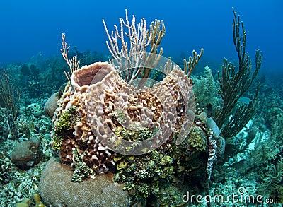 Coral Gardens in Roatan Honduras