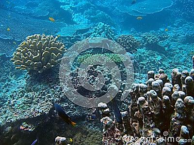Coral habitat