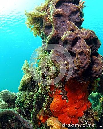 Coral Mound